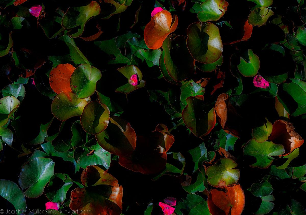 Blättermärchen
